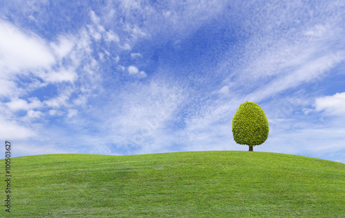 Tuinposter Heuvel Small tree on green grass hill