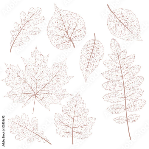 Obraz Dried leaves set. EPS 10 - fototapety do salonu