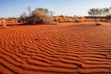 Small Plants In The Desert Of Western Australia