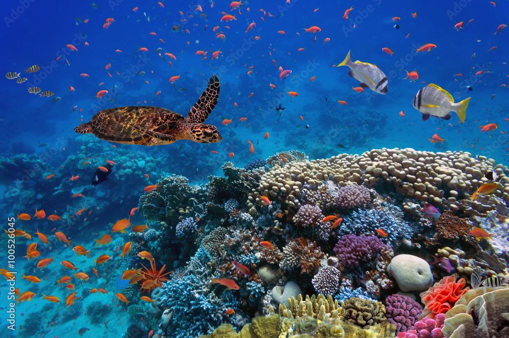 Fotografía Colorido arrecife de coral con muchos peces y tortugas ...
