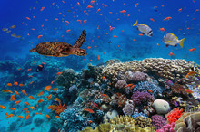 Colorful Coral Reef With Many ...