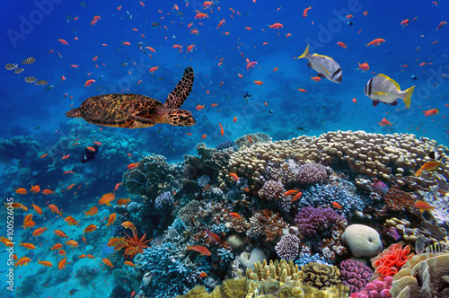 Photo  colorful coral reef with many fishes and sea turtle