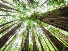 Muir Woods, California, USA