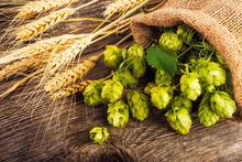 Barley And Hop Cones On  Rustic Wooden Background. Beer Brewing Ingredients