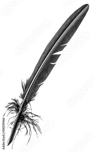 véritable plume noire de calligraphie, fond blanc Tableau sur Toile