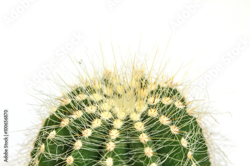 Papiers peints Cactus Cactus isolated on white background