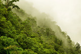 Rainforest near Cairns, Queensland, Australia - 100677091