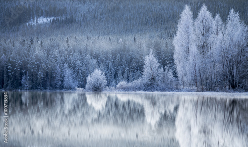 Forest reflected in frozen lake - 100713834