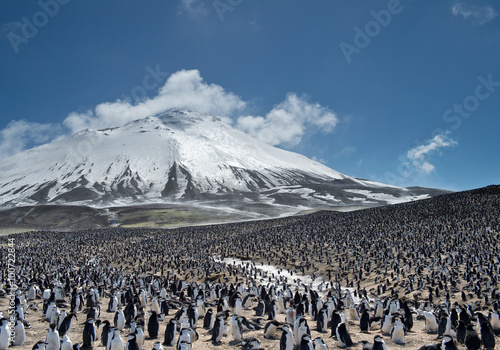 Poster Pingouin Colony of penguins with snowy mountain in the background, Zavodovski Island, South Sandwich Islands, Antarctica