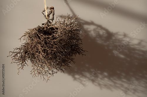 Fotografia  piccolo cespuglio secco