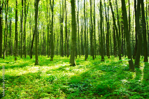 a path is in the green forest #100762228