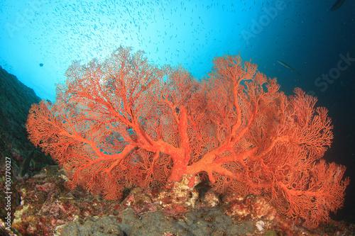 Foto auf Leinwand Unterwasser Tropical fish coral reef sea ocean underwater