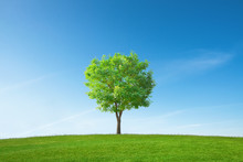 초원위의 나무