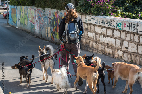 Photo  dog walker in the street with lots of dogs