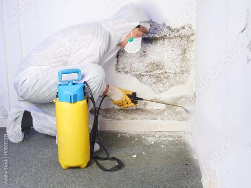 Pest controler eliminiates a mold infestation Tapéta, Fotótapéta