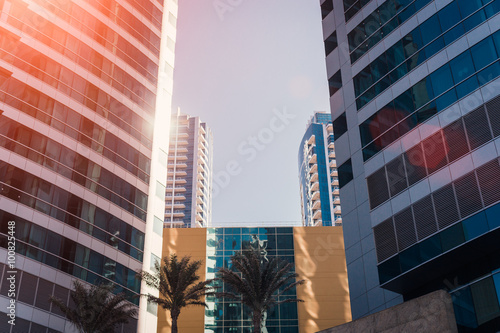 Photo  Two office buildings and exotic trees, sunny day