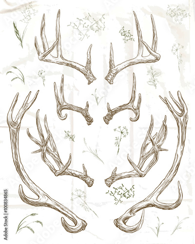 Leinwand Poster Hand drawing deer horns