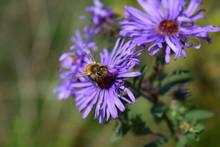 Honey Bee Grooming