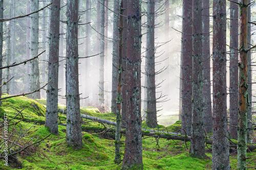 Papiers peints Foret brouillard Fog in a forest
