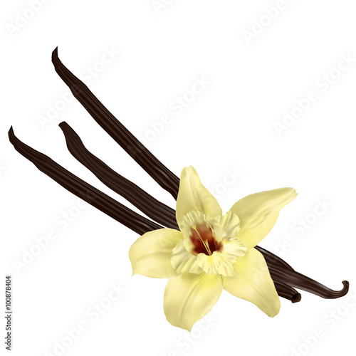 Fotografía  Vanilla pods isolated
