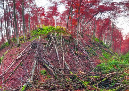 Foto op Plexiglas Crimson Deadfall at the Ukrainian Carpathians