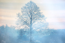 Winter Lone Tree Landscape Frost
