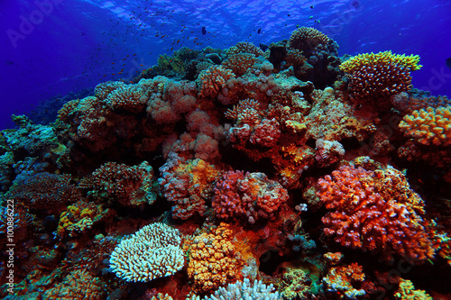 Deurstickers Koraalriffen coral reef underwater photo