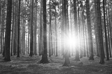 Black And White Photography Of Forest