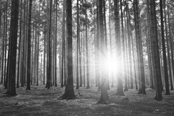 Panel Szklany Czarno-Biały Black and white photography of forest