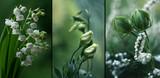 Fototapeta Kwiaty - Zielone kwiaty