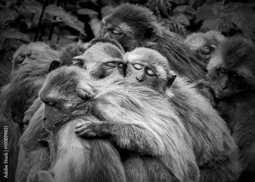 Monkey Huddle Canvas Print