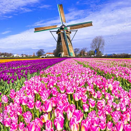 tradycyjna-holenderska-wies-wiatraki-i-tulipany