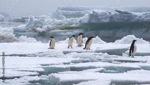 In de dag Antarctica Adelie Penguins on Ice Floe in Antarctica