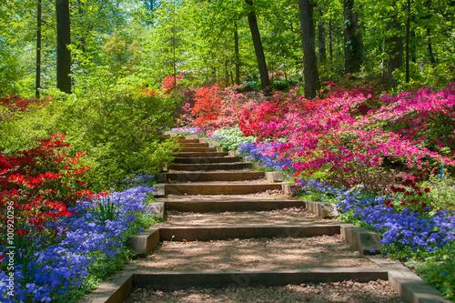 Deurstickers Azalea Azalea Garden