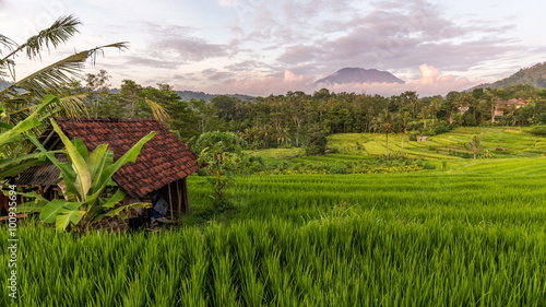 Fotobehang Rijstvelden View of rice field and mountain in Sidemen, Bali, Indonesia