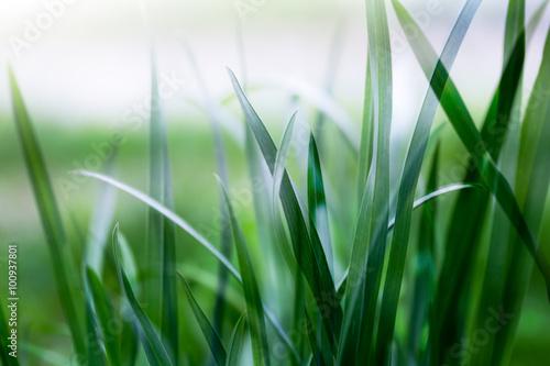 bright green grass - 100937801