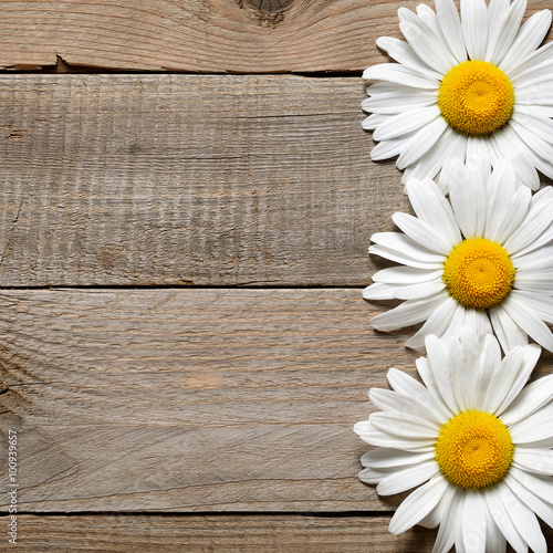 Foto op Canvas Madeliefjes Daisy flowers on old wooden background top view