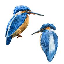 Watercolor Raster Blue Kingfis...