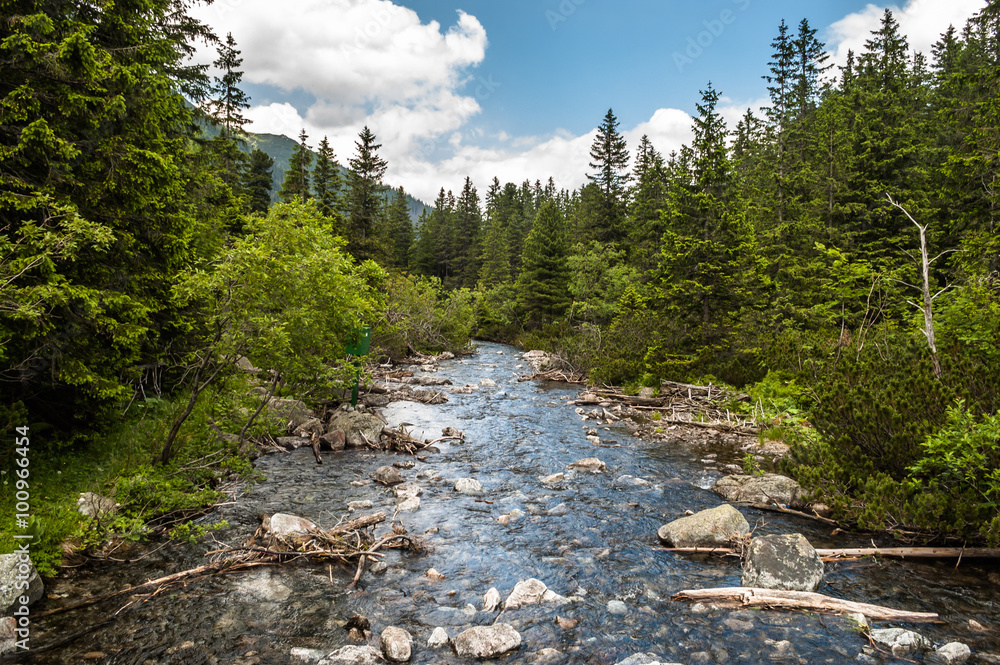 Fototapety, obrazy: Landscape with river in mountains among trees. Rybi Potok, Dolin