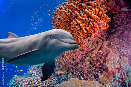 dolphin underwater on reef background - 100970801