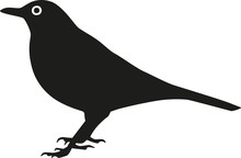 Blackbird Silhouette With Eye