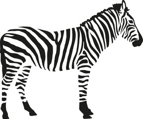 Panel Szklany Zebry Zebra silhouette isloated on white background