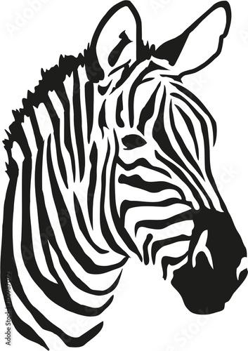 Zebra head - 100987072