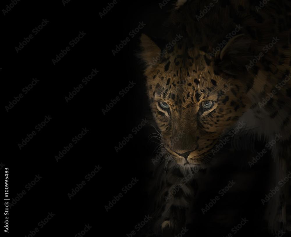 Fototapeta Leopard Portrait on Black