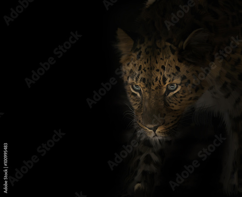Valokuva  Leopard Portrait on Black
