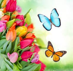 Fototapeta Motyle pack of spring tulips