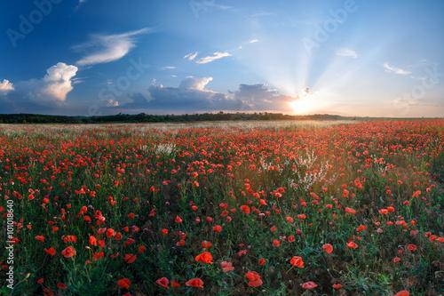 Foto op Plexiglas Klaprozen Big field of poppies