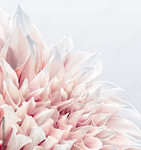 Dahlia Flower background