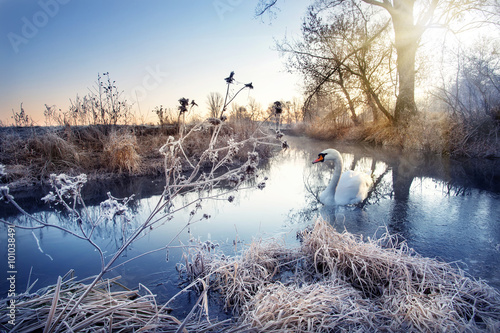 Photo sur Toile Bestsellers Winter river with white swan