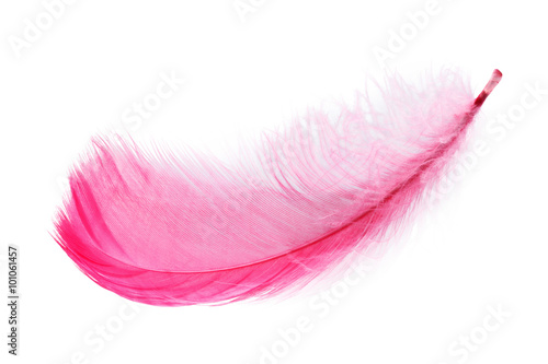 Pink feather white